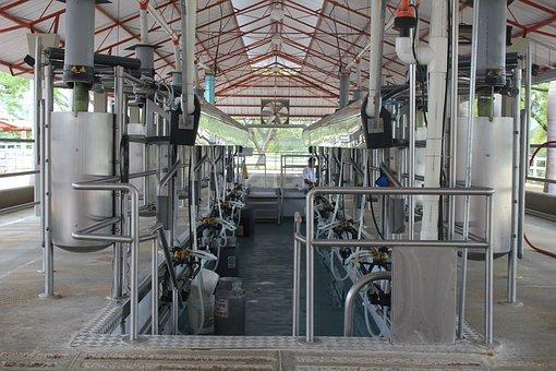 Milking, Milking Installation, Order