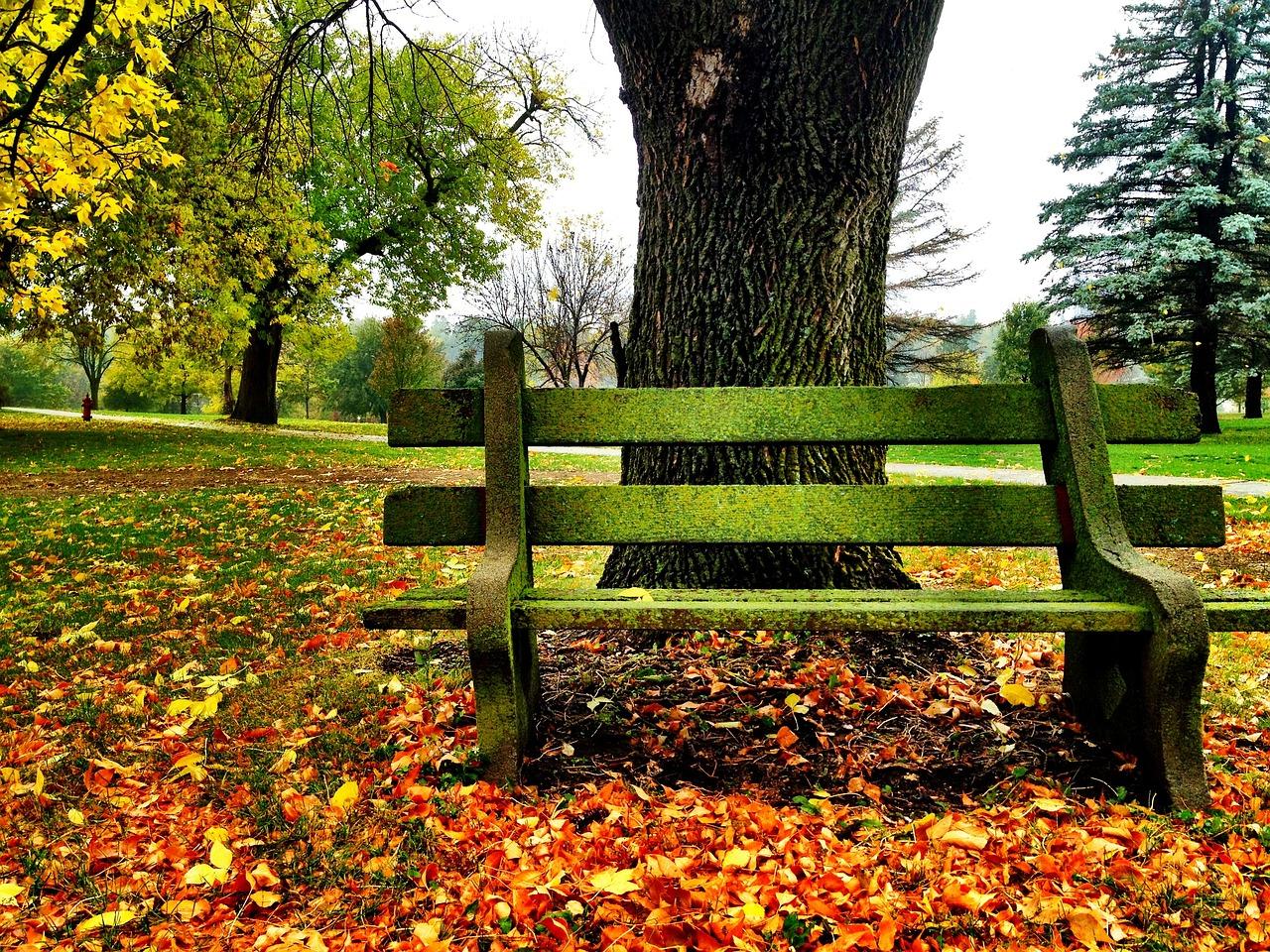 Картинка скамья осенью