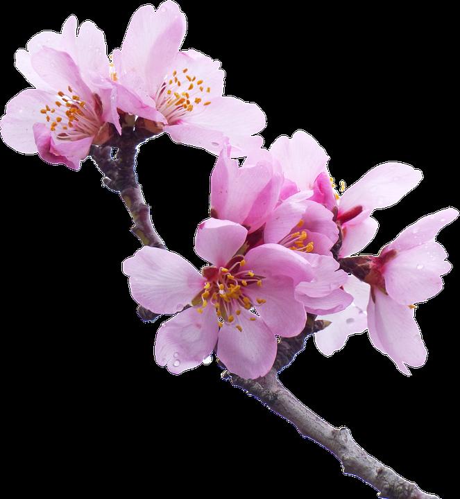 the almond tree free pdf