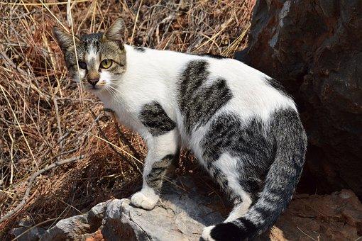 Kucing, Buta, Mabuk, Putih, Abu Abu