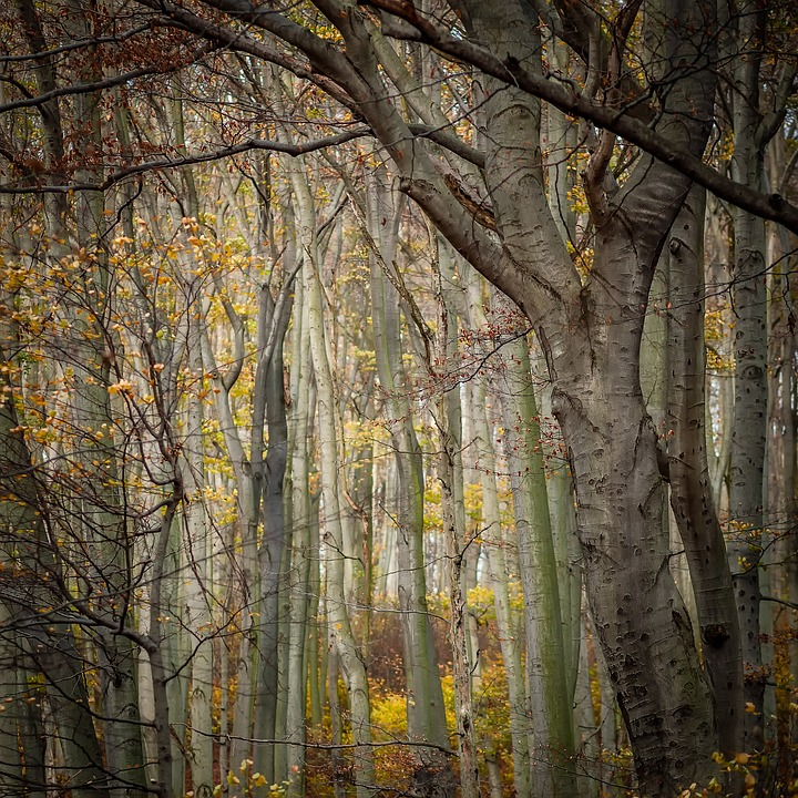 Texture, Forest, Trees, Background, Nature, Autumn