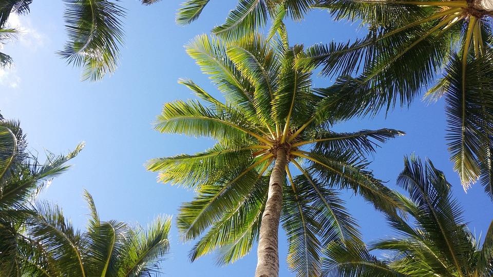 Tropical Waves Sky Mountains Clouds Island Moon Night: Palm Tree Sky Boracay · Free Photo On Pixabay