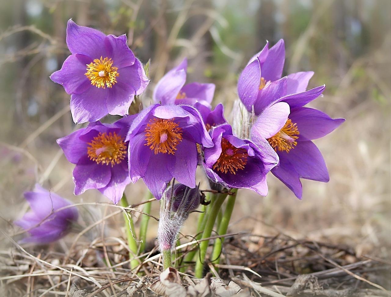 здесь лесные цветы картинки и названия цветов хочу бокал