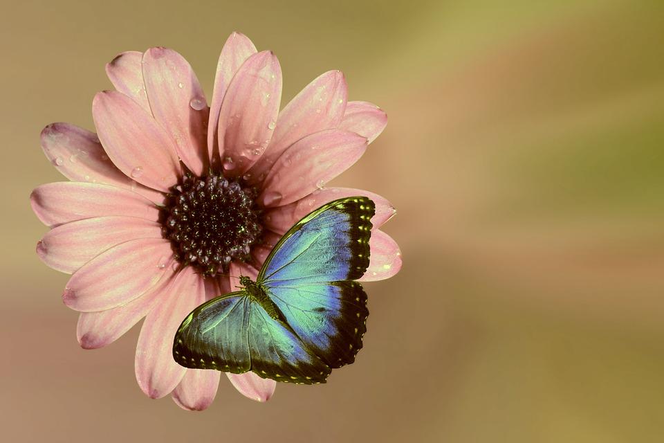 Blomst, Lyserød, Blomstre, Insekt, Sommerfugl, Natur
