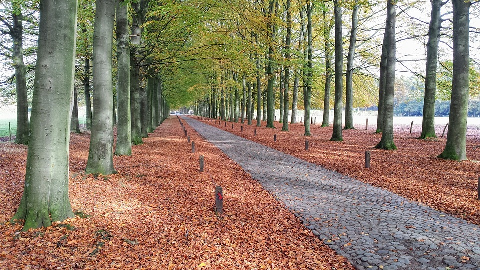 Forest, Path, Belgium, Trees, Nature