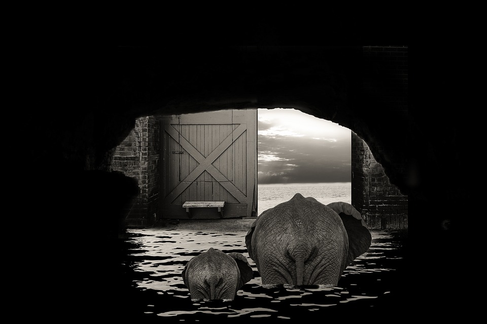 Cave Elephant Door Output Sea Ocean Cloud