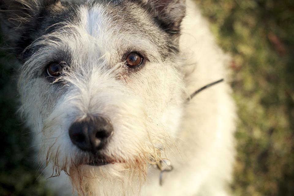 Download Fluffy Canine Adorable Dog - dog-2066224_960_720  Trends_486595  .jpg