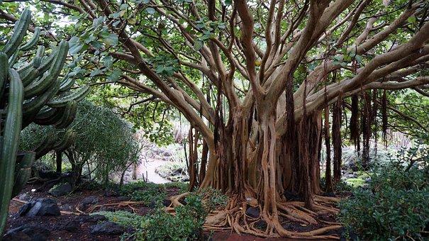 Canary Islands, Botanical Garden