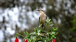 bird, haughtiness, sovereignty