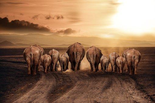Elephant, Dust, Road, Africa, Savannah