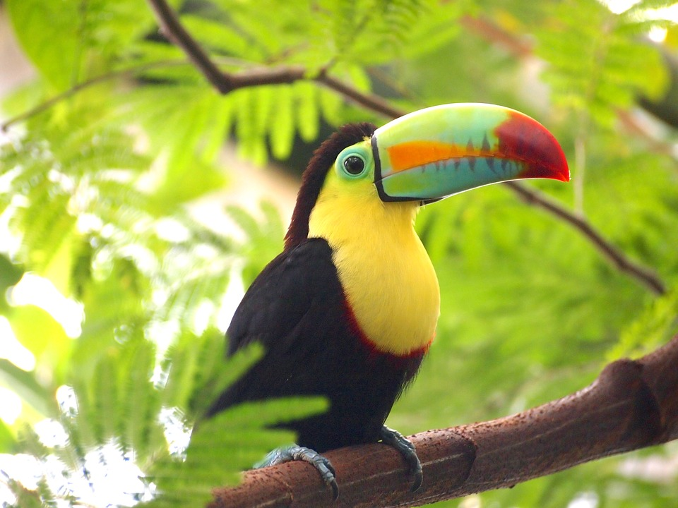 Toucan Bird Nature · Free photo on Pixabay