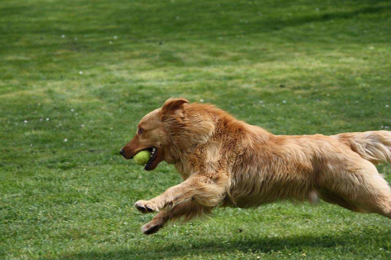 картинки бегущей собаки с боку повышения