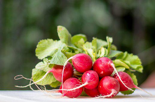 Radis Flou Bokeh Red Vert Racine Légumes F