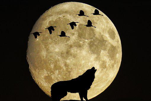 Mystical, Moon, Full Moon, Birds, Wolf