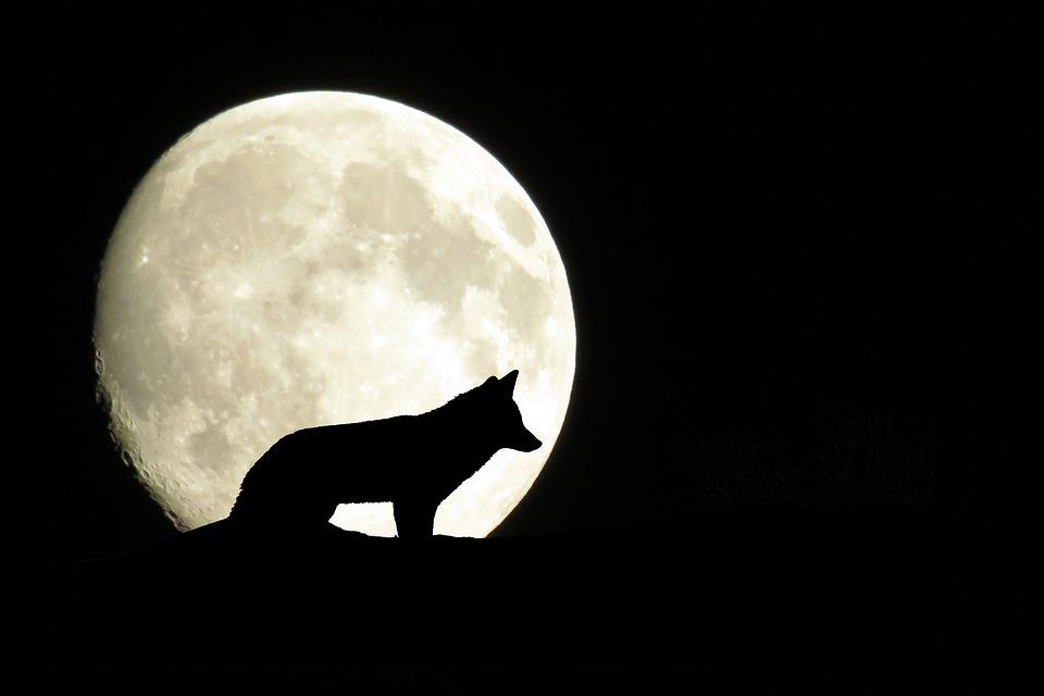 Très Illustration gratuite: Mystique, Lune, Pleine Lune, Loup - Image  DR08
