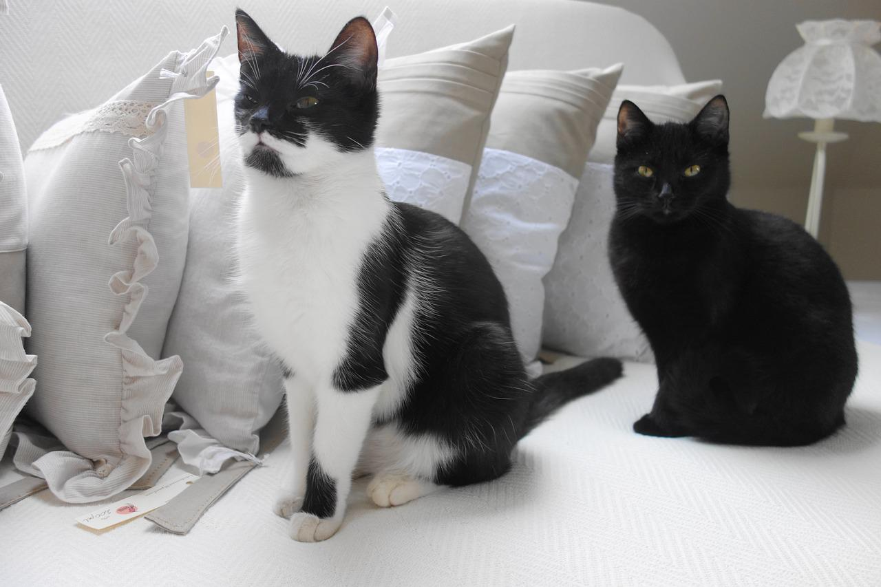 how do cats get neutered