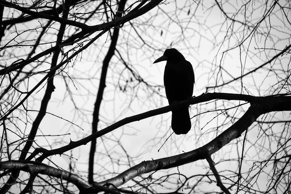鳥, ツリー, 白黒, 悲しみ, 自然, くちばし, 飛ぶ, 動物, ブランチ, 彼自身, 孤独です, 悲しい