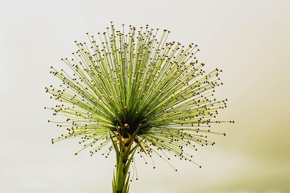 flower chuveirinho cerrado always alive
