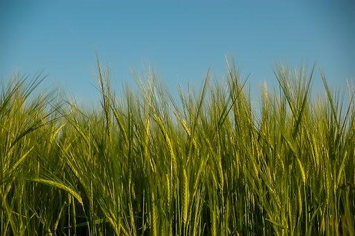 Мировой рынок зерна: «Good lift»
