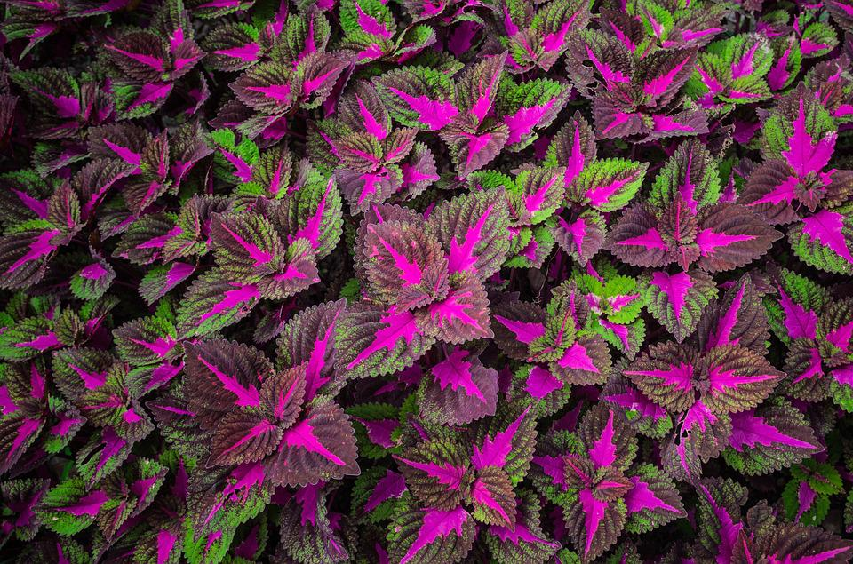 Leaf Violet Green Wallpaper Colorful Summer