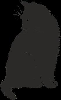 Cat Shadow Silhouette Black Animal Cat Cat