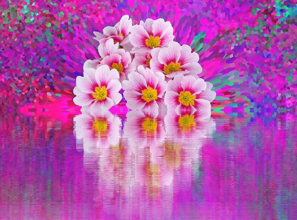 free illustration  spring  primroses  easter  flowers
