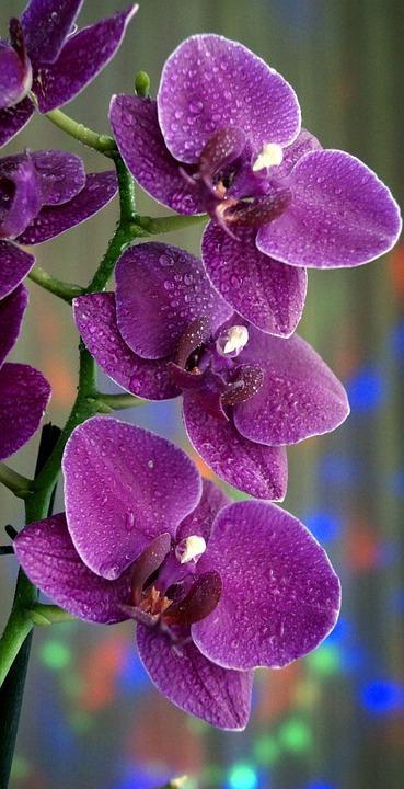 Gambar Bunga Anggrek Cantik Gambar Bunga