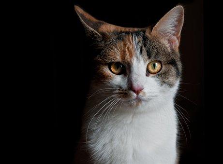 Katze, Blick, Chiaroscuro, Katze, Katze