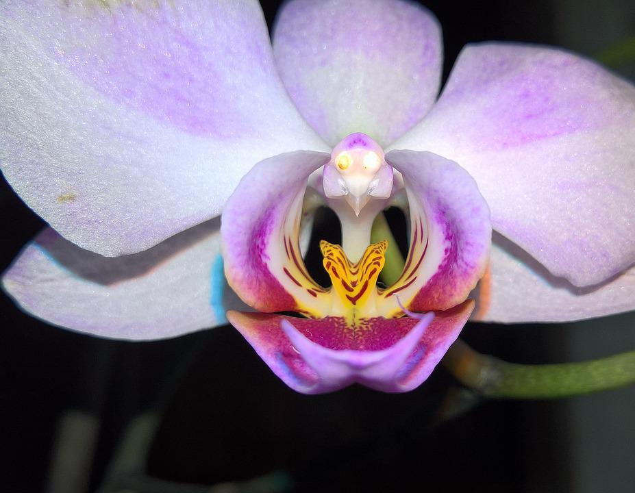 free photo orchids, flowers, very long life  free image on, Natural flower