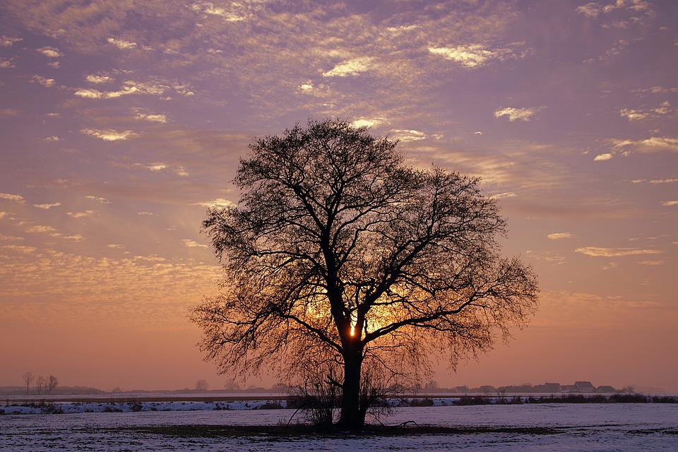 Tree, Lonely, Sunset, Winter, Colors, Snow, Twilight