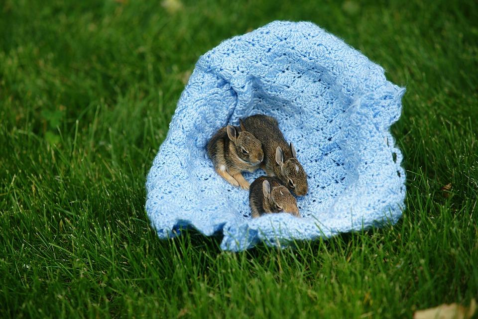 free photo baby bunnies rabbits wild free image on