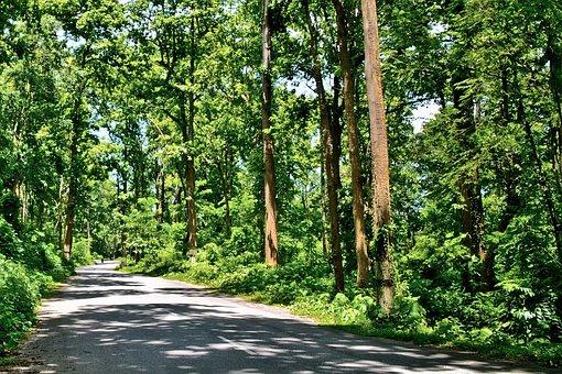 Forest, Dense, Thick, Landscape, Tree