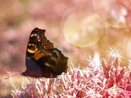 Sommar, Fjäril, Blomma, Rosa, Bokeh