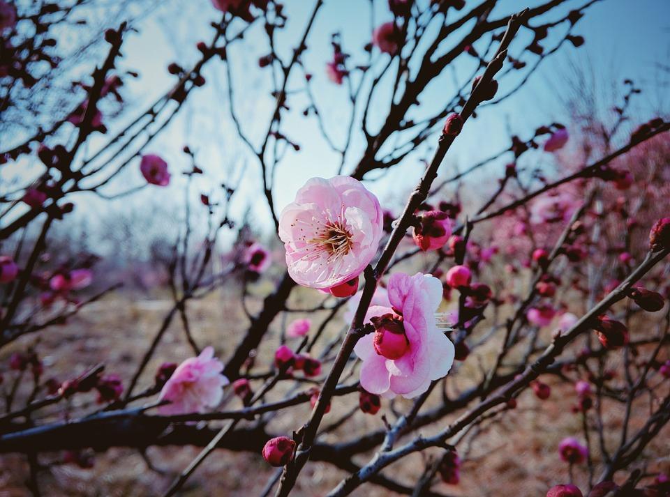 blomster vinter