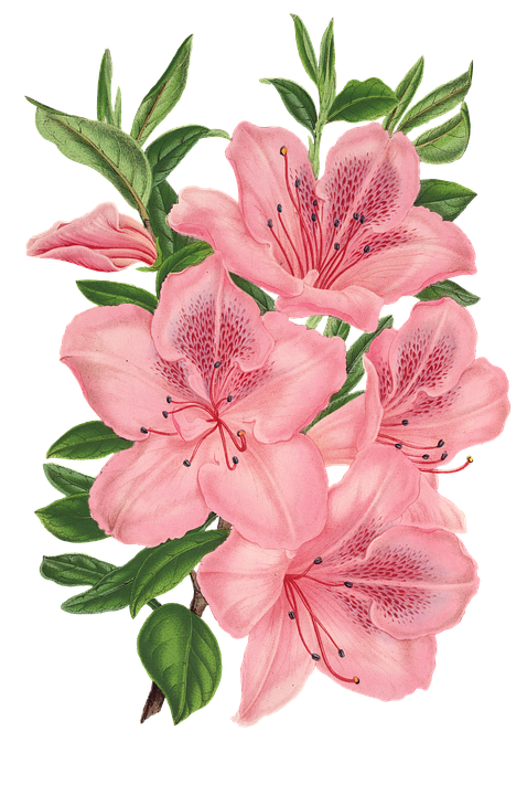 Flower Plant Blossom · Free image on Pixabay