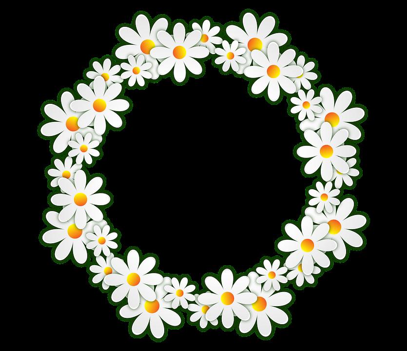 Flores Margarita Marco De Fotos · Imagen gratis en Pixabay
