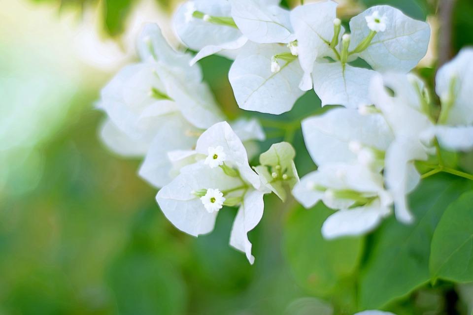 Flores Blancas Blanco · Imagen gratis en Pixabay