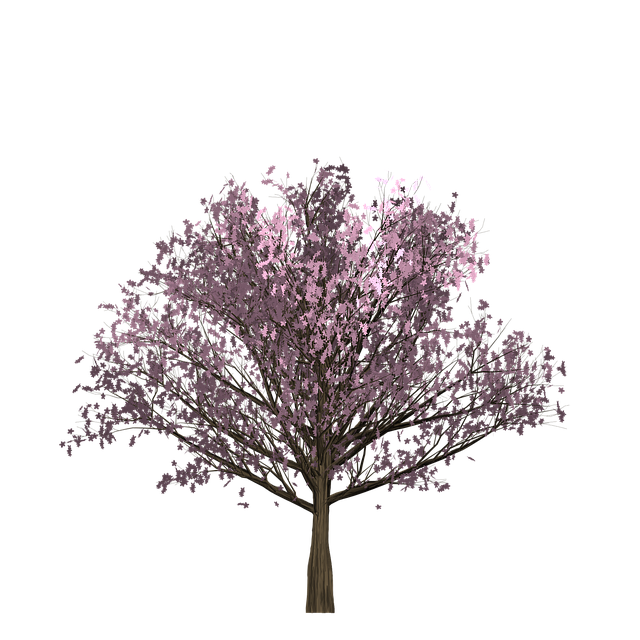 cherry pink tree painted 183 free image on pixabay