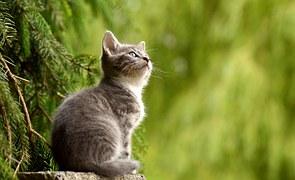 Cat, Young Animal, Curious, Wildcat