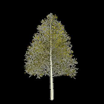 Aspen, Tree, Green, Leaf, Painted Tree