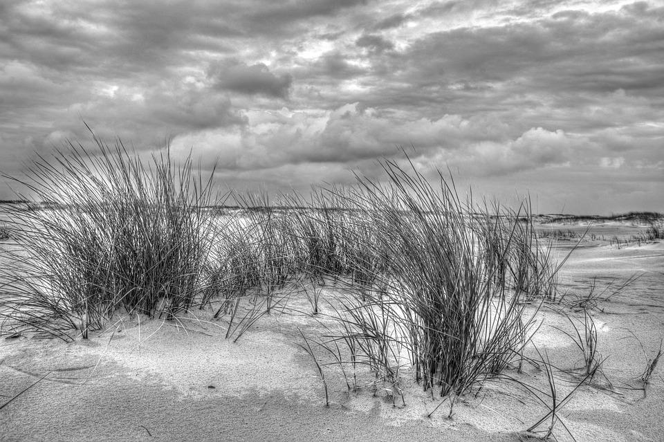 Black And White Beach Nature Free Photo On Pixabay