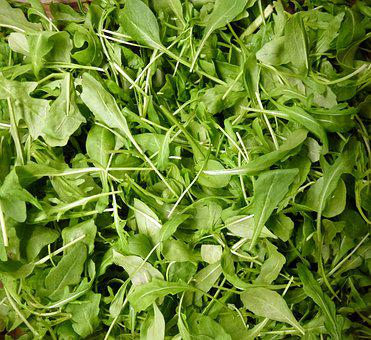 Verts, Salade, Vert, En Bonne Santé