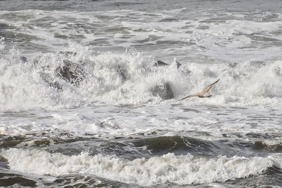 Nature, Sea, Море От Япония, Въртоп, Wave, Животните