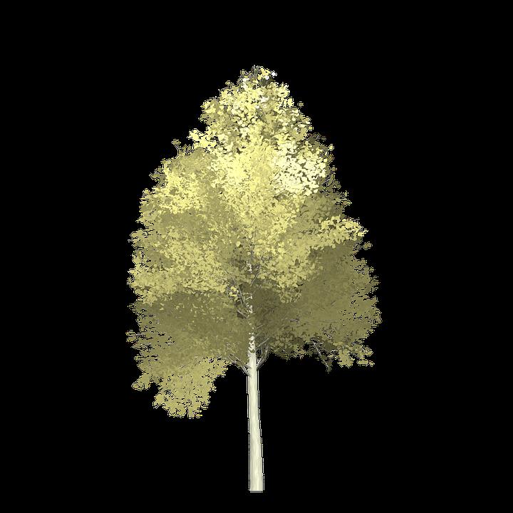 Aspen Tree Painted 183 Free Image On Pixabay