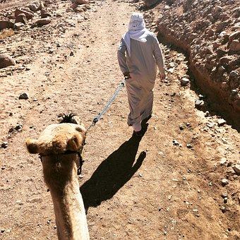 Sinai, Camel, Mountain Mose, Egypt