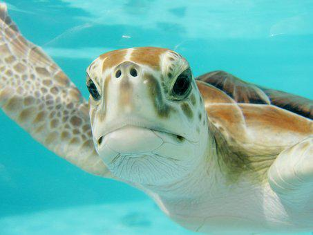 Mexico Turtle Swim Underwater Nature Anima