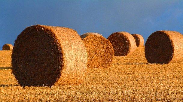 Bales, Straw, Harvest, Landscape