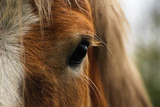 Horse Eye Close Up Head Animal Stalli
