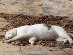 cat, sleep soundly, nod