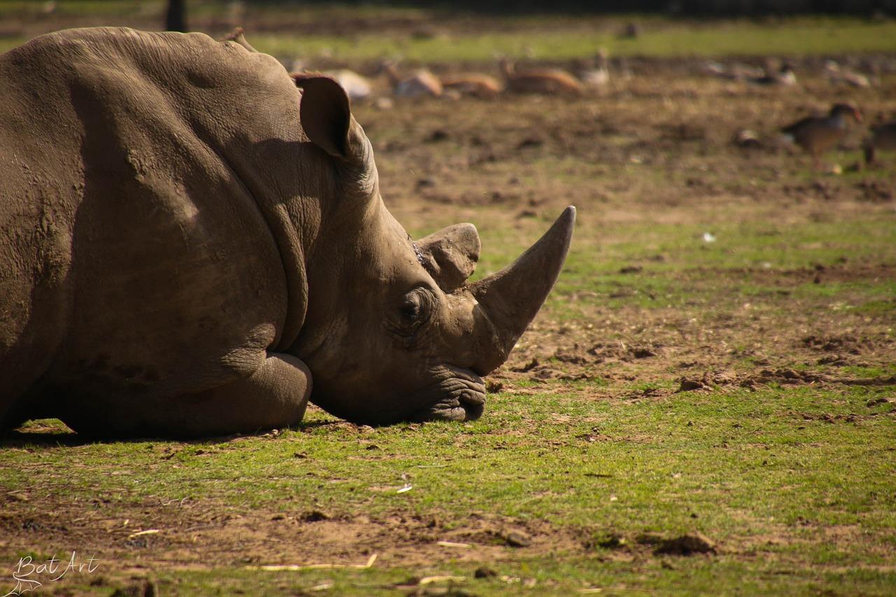 фото стадо носорогов предлагаем